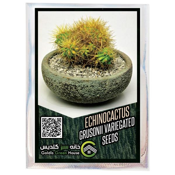 بذر اچینو کاکتوس گروزونی ابلق خانه سبز گلدیس کد 43