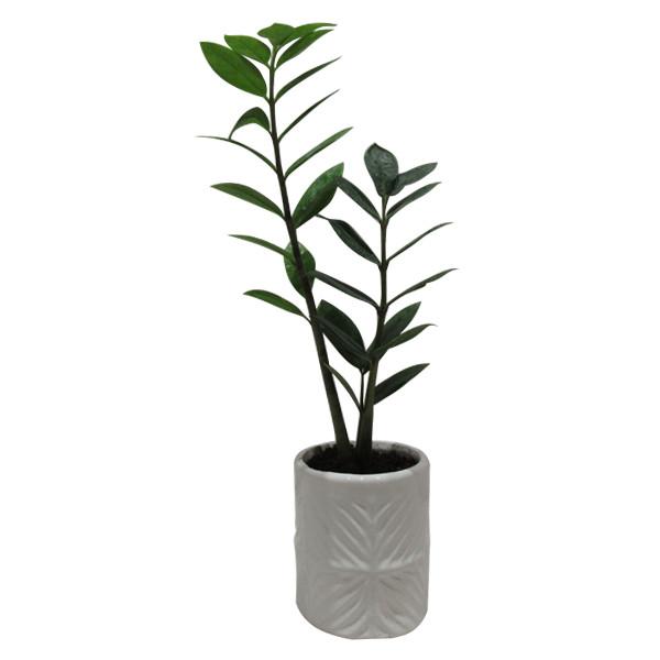 گیاه طبیعی زاموفیلیا کد S - M01