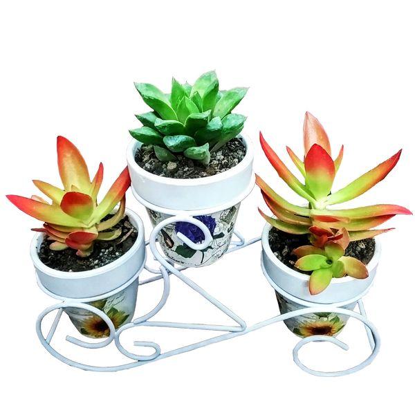 گیاه طبیعی ساکولنت مدل B-5 مجموعه 3 عددی