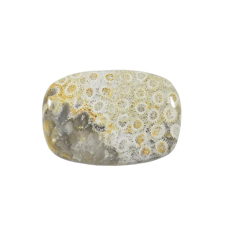 سنگ فسیل مرجان کد TG6527