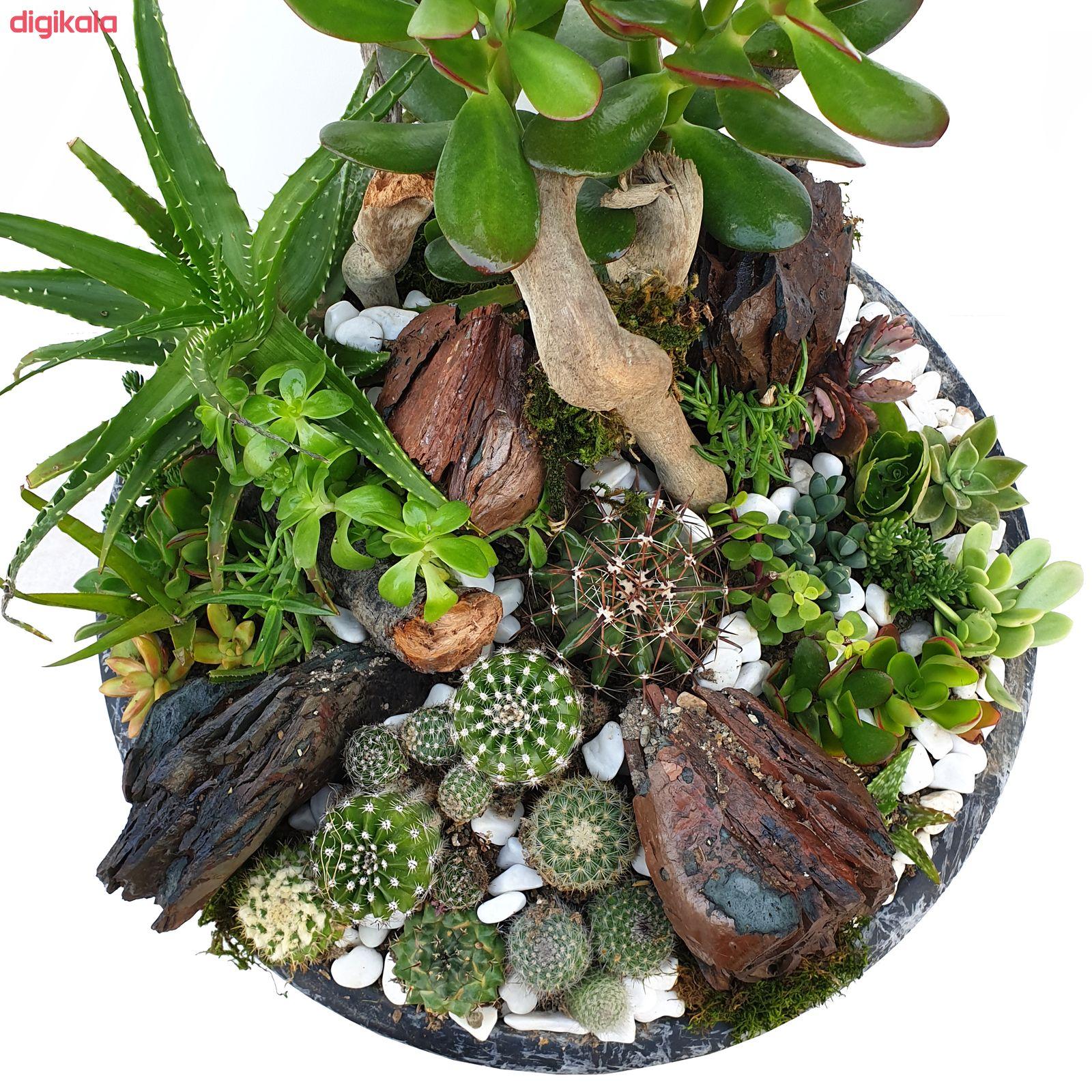 گیاه طبیعی کاکتوس مدل MK-99006 main 1 1