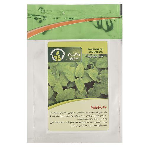 بذر بادرنجبویه پاکان بذر