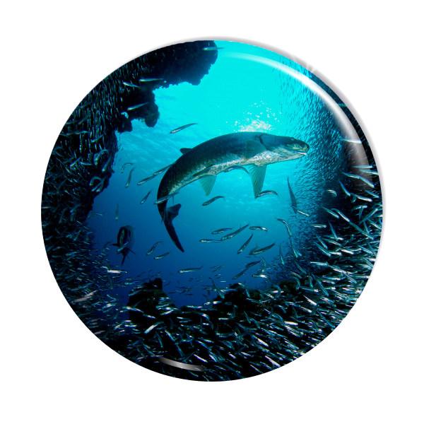 پیکسل اسانا طرح اقیانوس ماهی کوسه  کد  ASA120