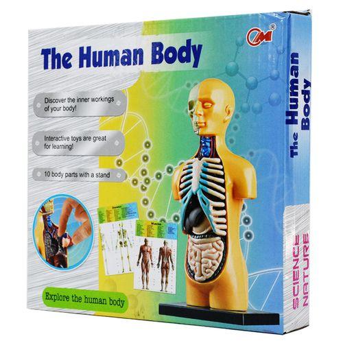بازی آموزشی طرح مولاژ آناتومی بدن مدل The Human Body 3305