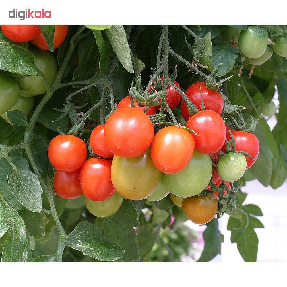 بذر گوجه گیلاسی قرمز چری مدل 085 main 1 1