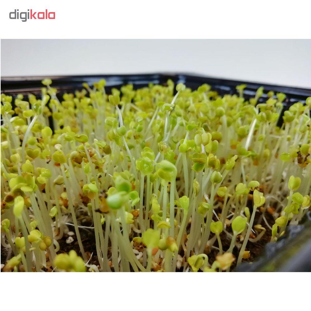 بذر میکروگرین گشنیز کد 002 وزن 800 گرم