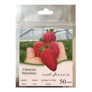 بذر توت فرنگی کاماروسا مدل 001