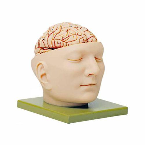 بازی آموزشی طرح آناتومی سر انسان  کد 15