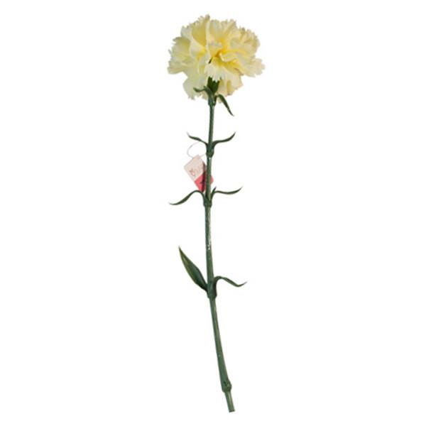 گل مصنوعی تولیپ طرح میخک مدل 501