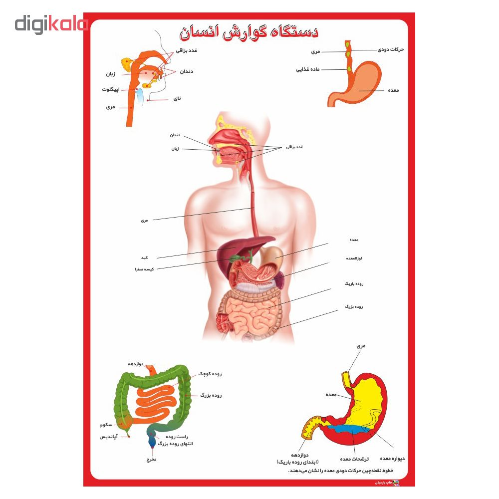 پوستر آموزشی چاپ پارسیان طرح دستگاه گوارش انسان کد 001