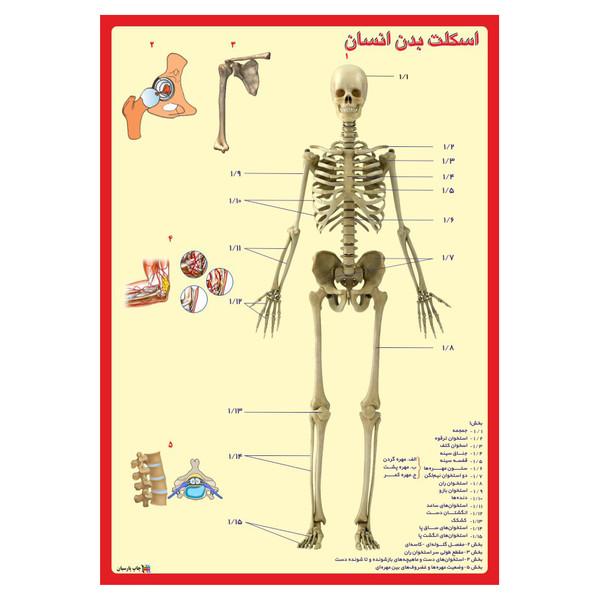 پوستر آموزشی چاپ پارسیان طرح اسکلت بدن انسان کد 002