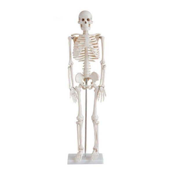 بازی آموزشی طرح آناتومی بدن کد 1399