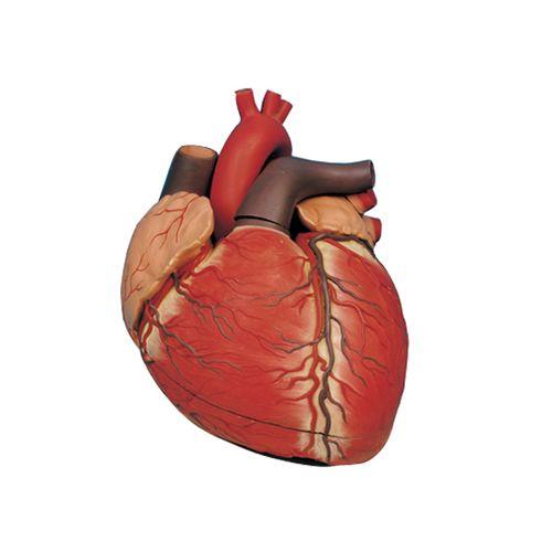 بازی آموزشی طرح مولاژ قلب انسان کد 13102