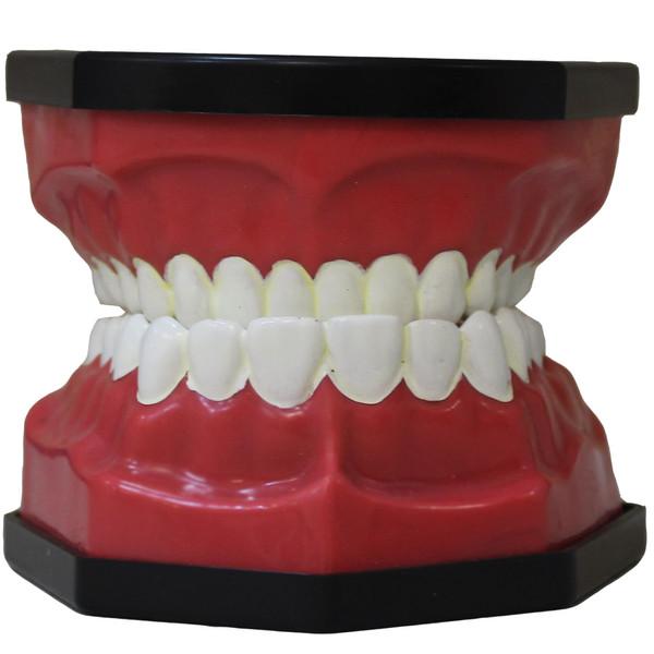 بازی آموزشی طرح آناتومی دندان کد 25