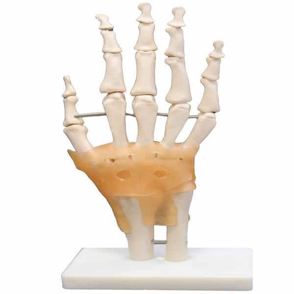 بازی آموزشی طرح آناتومی اسکلت دست کد159