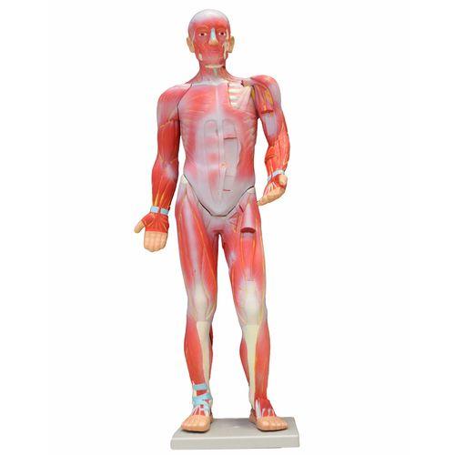 بازی آموزشی طرح عضلات بدن انسان کد 51