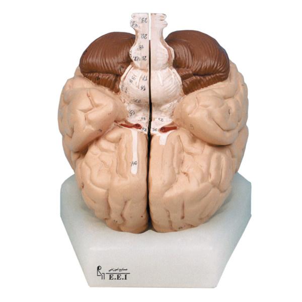 بازی آموزشی صنایع آموزشی طرح مولاژ مغز انسان کد 96