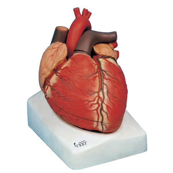 بازی آموزشی صنایع آموزشی طرح مولاژ قلب کد 25001