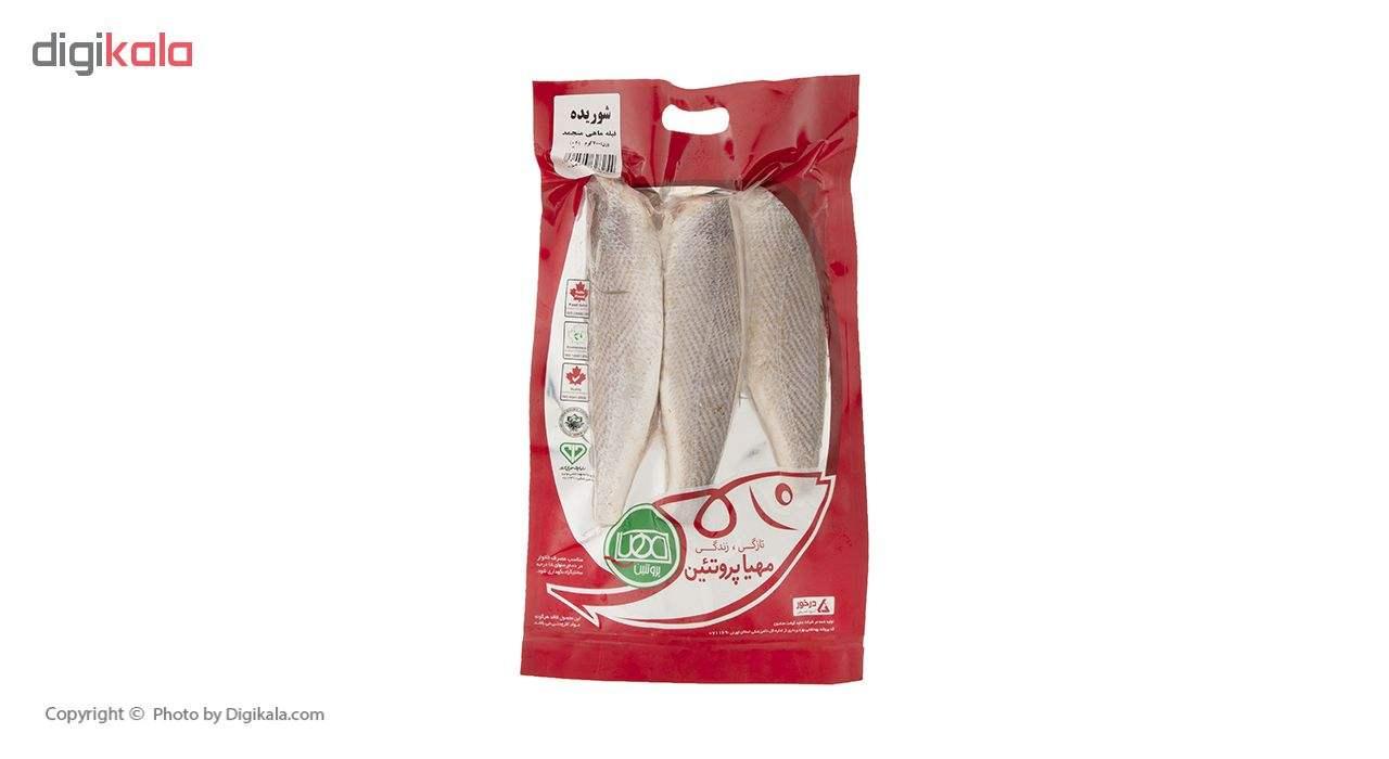 فیله ماهی شوریده منجمد مهیا پروتئین مقدار 700 گرم main 1 1