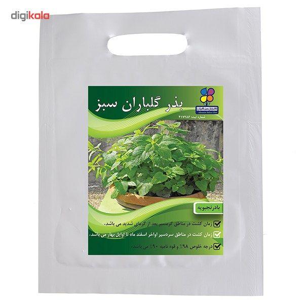 بذر بادرنجبویه گلباران سبز main 1 1