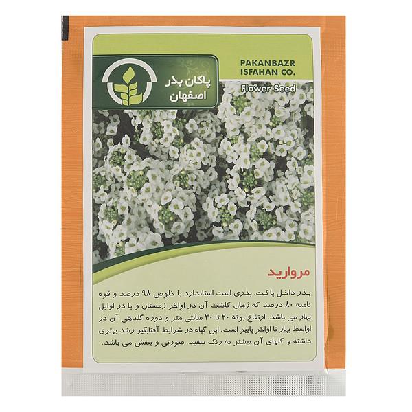 بذر گل مروارید پاکان بذر