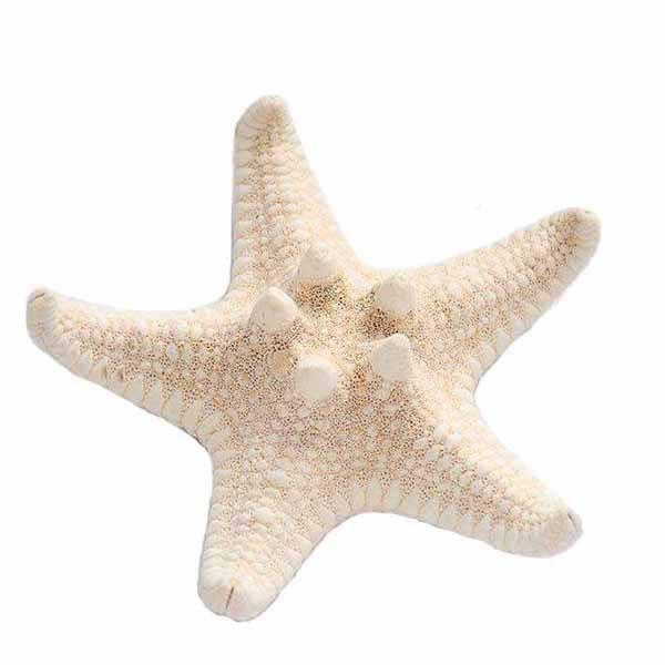 دکوری طرح ستاره دریایی مدل LOW01