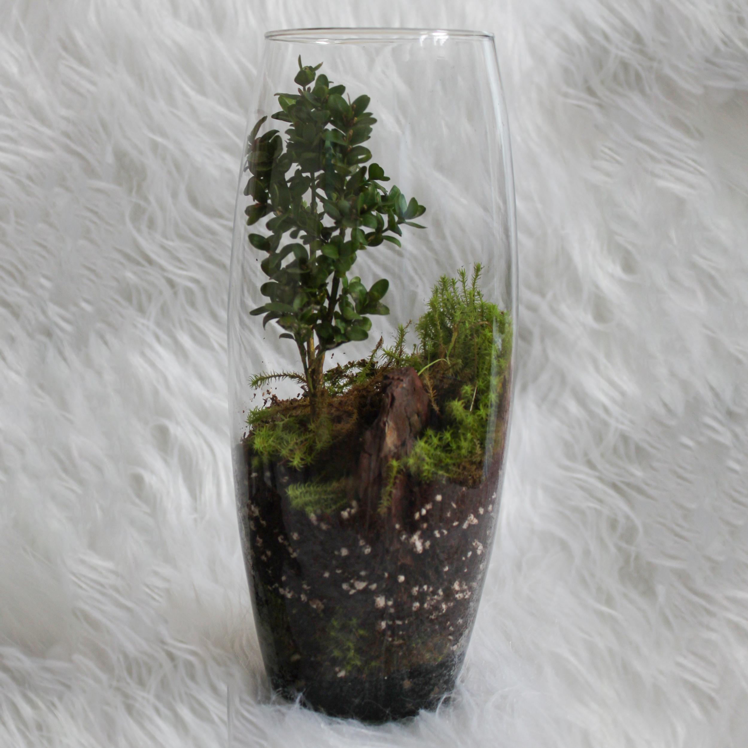 تراریوم گیاه طبیعی کد OSTT-11