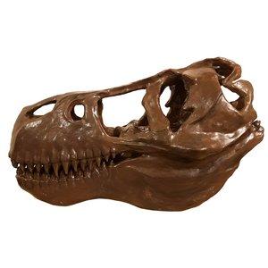 مجسمه مدل جمجمه دایناسور کد A01