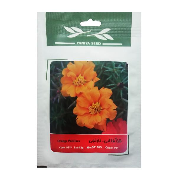بذر گل ناز آفتابی نارنجی وانیا سید مدل O215