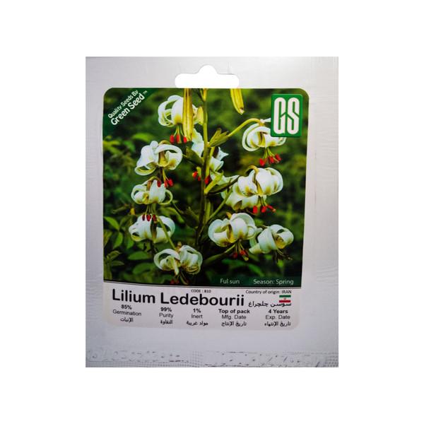 بذر گل سوسن چلچراغ گرین سید مدل BZG72