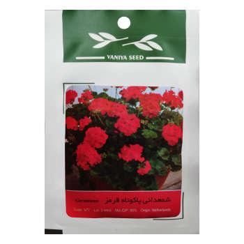 بذر گل شمعدانی پاکوتاه قرمز وانیا سید مدل N77