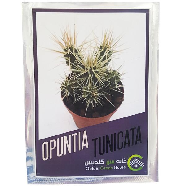 بذر کاکتوس اپونتیا تونیکاتا کد 01