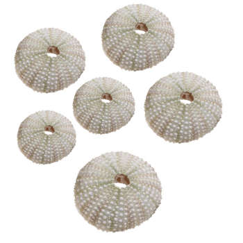 دکوری مدل توتیا دریایی بسته 6 عددی