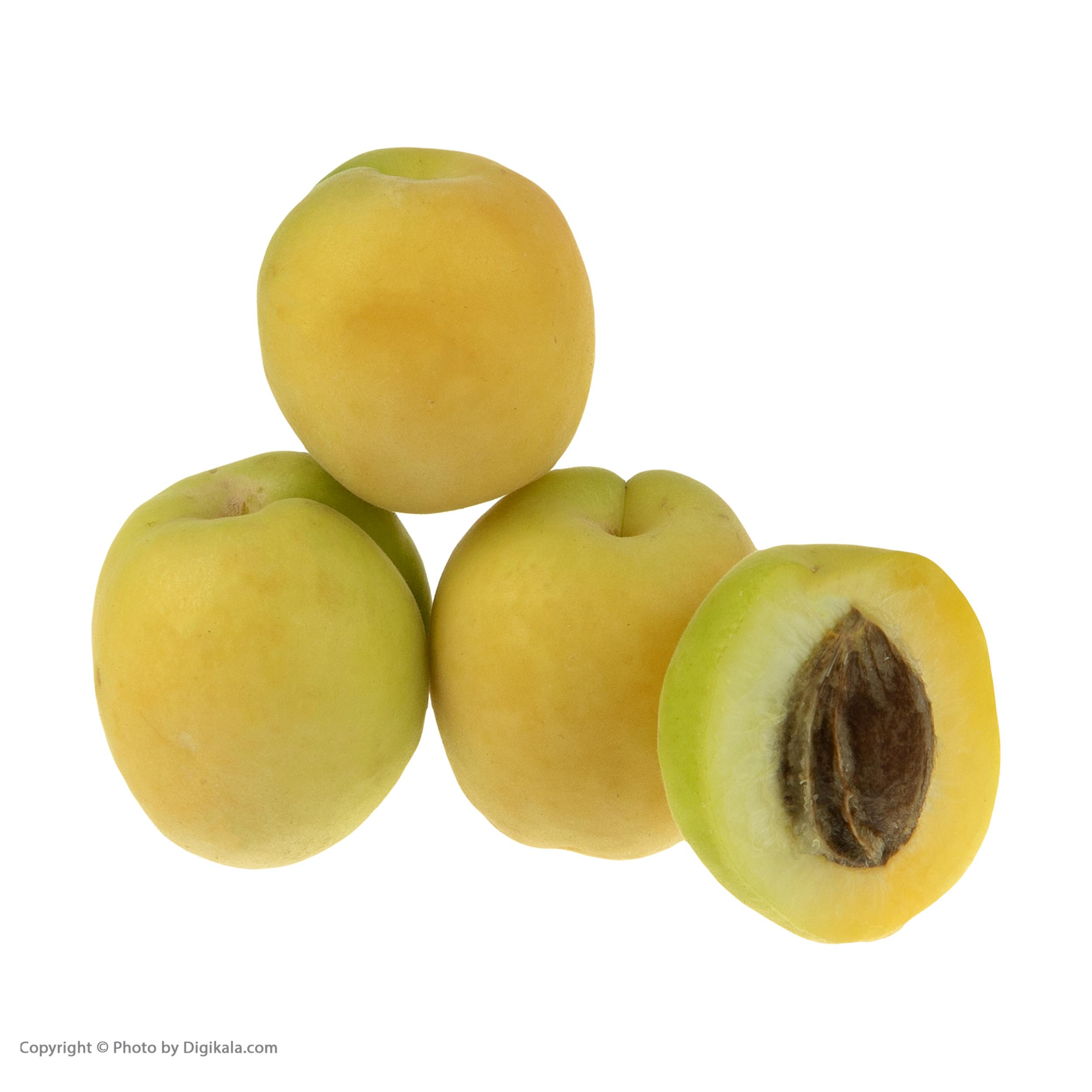 زردآلو بلوط - 1 کیلوگرم