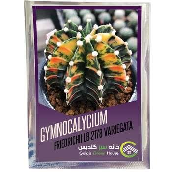 بذر ژمینوکالیسیوم فردریکی ابلق خانه سبز گلدیس کد 04