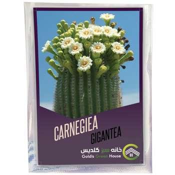 بذر کارنژیا جیگانتا خانه سبز گلدیس کد 1862 بسته 100 عددی