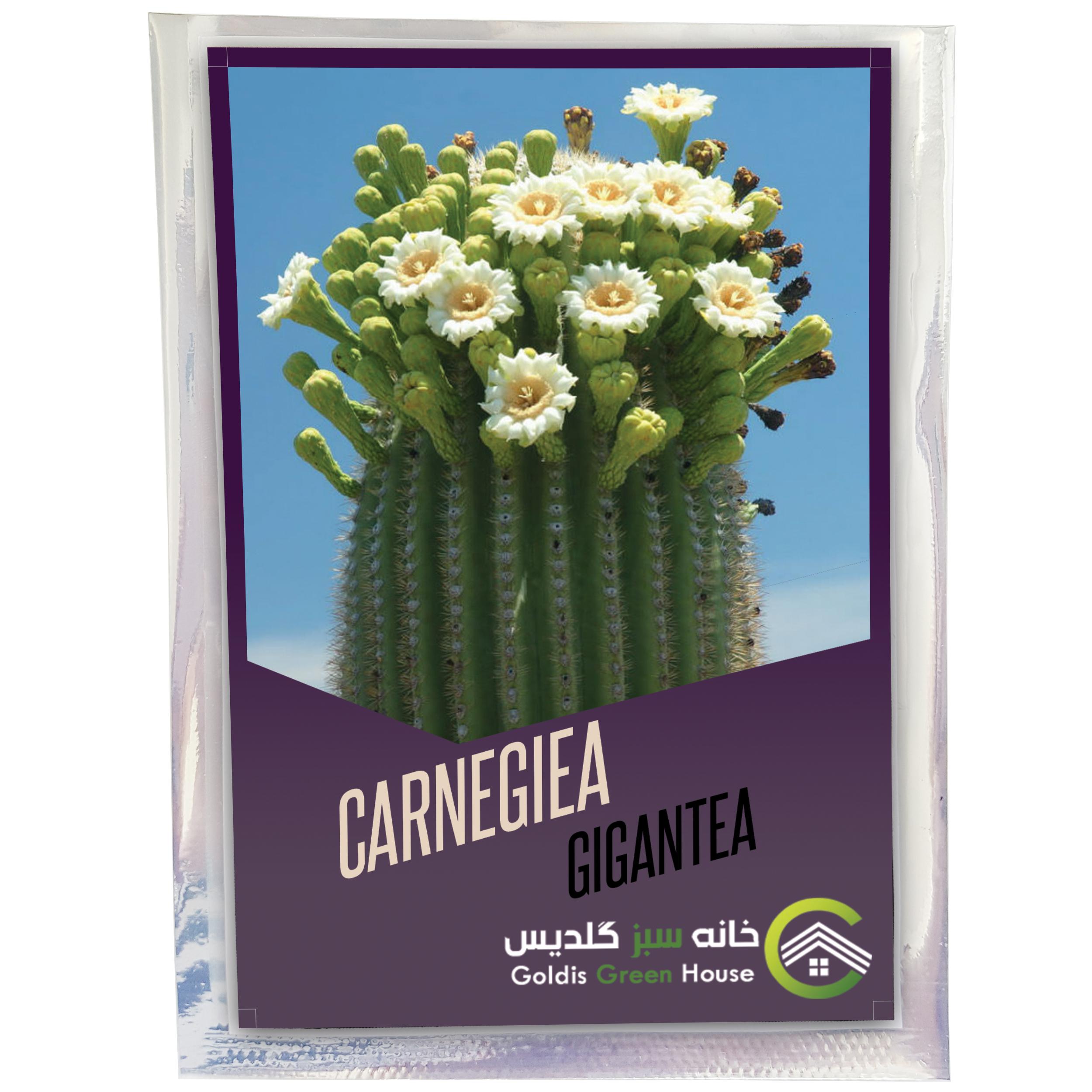 بذر کارنژیا جیگانتا خانه سبز گلدیس کد 1862 بسته 10 عددی