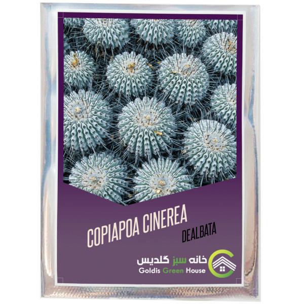 بذر کوپیاپوا سینره آ دلباتا خانه سبز گلدیس کد 09