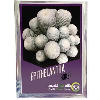 بذر اپیتلانتا بوکئی خانه سبز گلدیس کد 2395 بسته 100 عددی