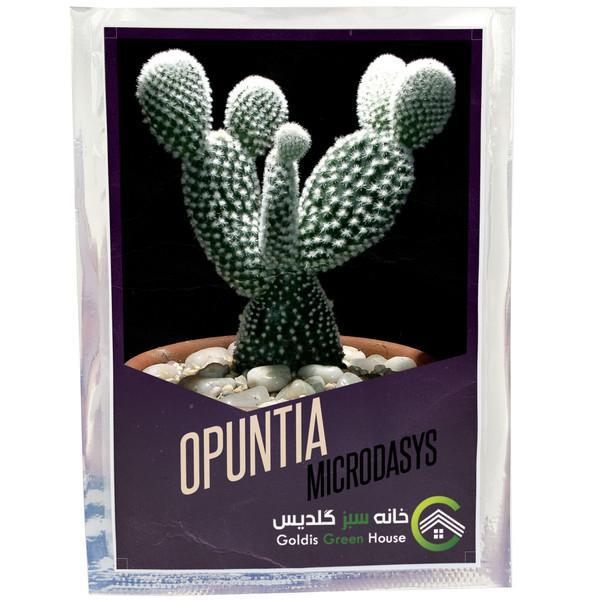 بذر اپونتیا میکروداسیس خانه سبز گلدیس کد 13