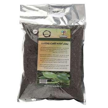 بستر آماده کشت گیاه بنجامین گلباران سبز بسته 2 کیلوگرمی