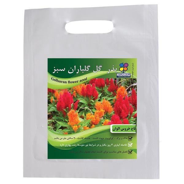 بذر  گل تاج خروس الوان گلباران سبز