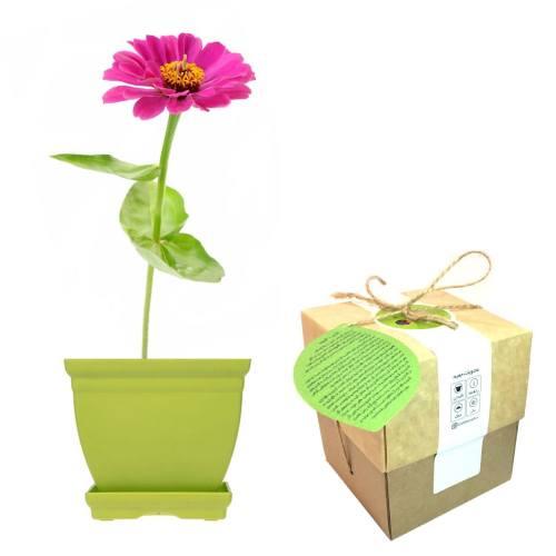 مجموعه کاشت گلدونه گل آهار