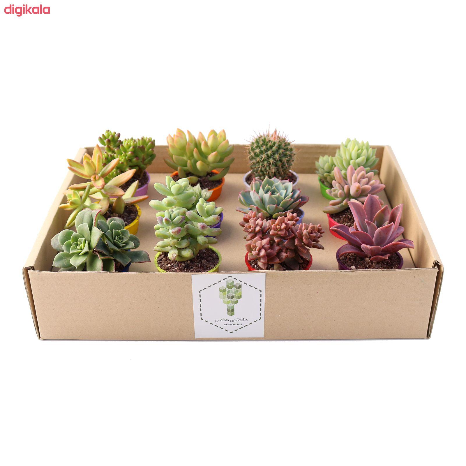گیاه طبیعی کاکتوس و ساکولنت آیدین کاکتوس کد CB-009 بسته 12 عددی main 1 5