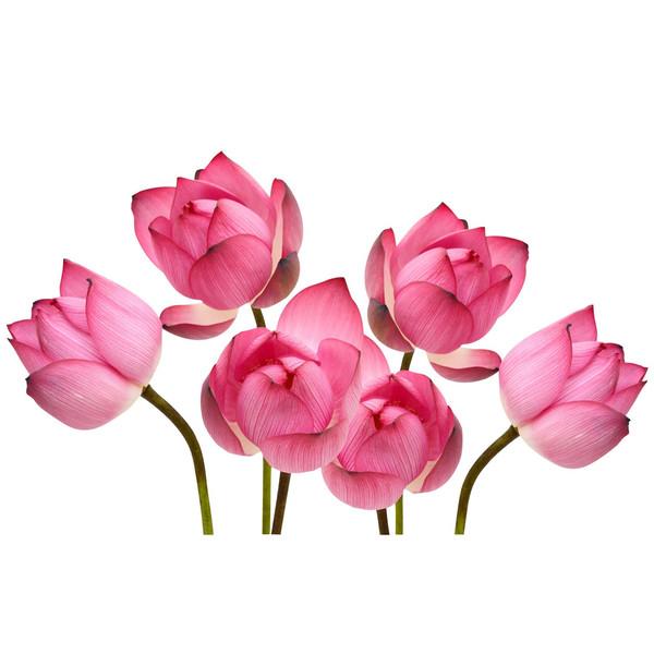 استیکر دیواری سه بعدی ژیوار مدل گل های نیلوفر