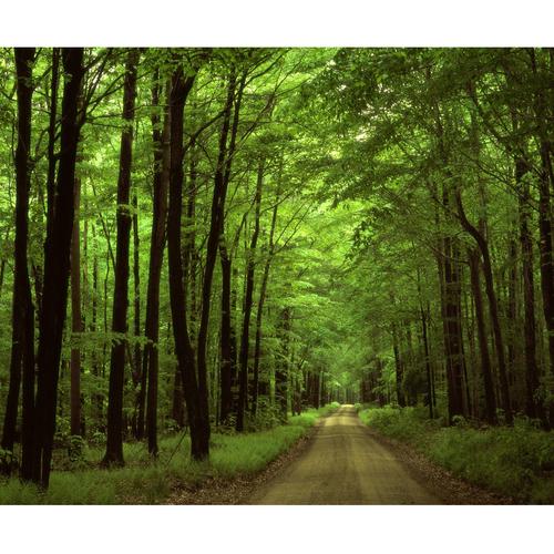 تابلو بوم طرح جنگل کد Best Nature77-N