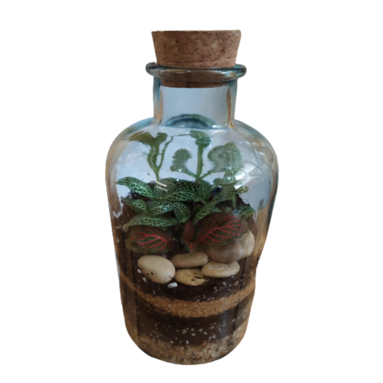 تراریوم گیاه طبیعی کد 104