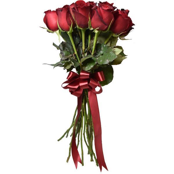 شاخه گل رز هلندی قرمز دسته 20 عددی