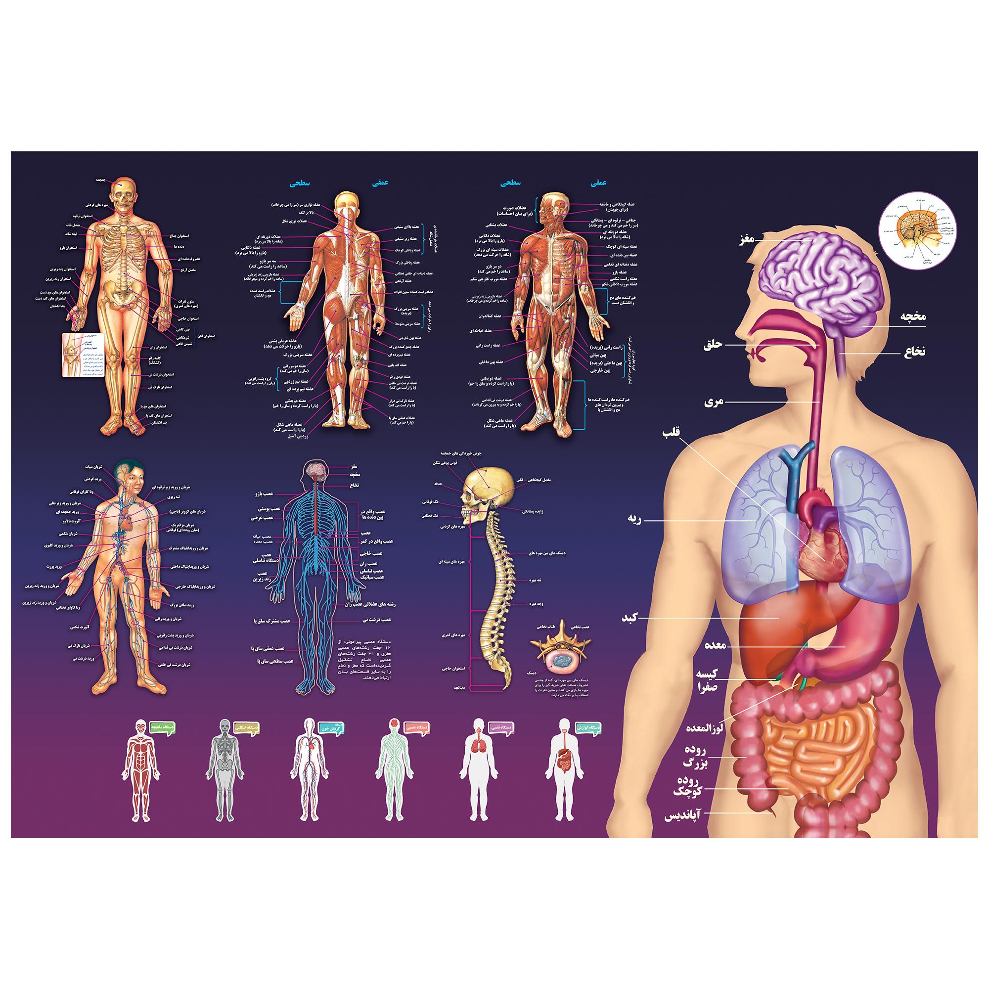 پوستر آموزشی اندیشه کهن مدل آناتومی بدن انسان کد 301