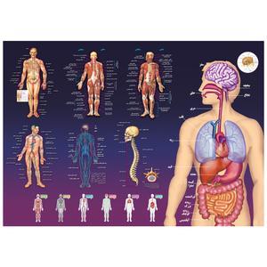 پوستر آموزشی اندیشه کهن طرحآناتومی بدن انسان کد 301